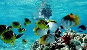 snorkeling-in-vanuatu